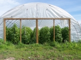 High tunnels help the farm extend their growing season.